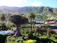 0290-Tenerife
