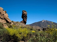 30M0086 Tenerife el Teide Roques de Garcia Pico del Teide Descurainia bourgeauana 300510